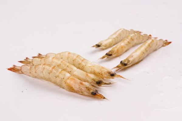 Ko Ebi (Thelly Shrimp)
