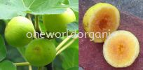 Marylane Figs Varieties