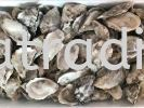 FO0013  Half Shell Oyster (L) Sashimi Grade  冷�霭肟巧�蚝 Frozen Seafoods