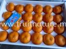Mandarin Nagasaki  Mandarin Fruits