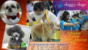 Pet Industry Seminar Sandakan {Register Now}