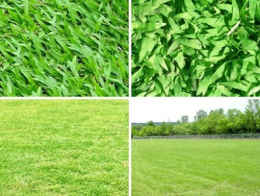Artificial and Real Turf