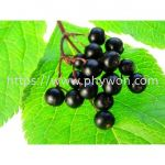 Elderberry Juice Powder