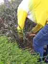 Soil Loosening Soil Loosening Landscape Maintenance
