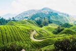 3D2N - Cameron Highland Holiday Packages Tour Packages