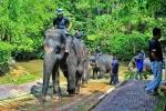 Elephant Sanctuary & Aborigine Settlement Attractions