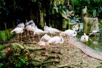Bird Park & Lake Garden Attractions