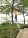 Tree Trimming Tree Trimming Landscape Maintenance