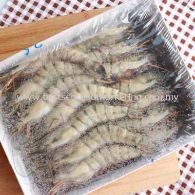 Tiger Prawn / ÀÏ»¢Ïº / Udang Harimau (Size 31-40)(sold per pack)