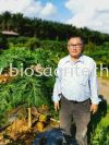 原本的木瓜树 (Original papaya tree) Papaya Testimonial  Bio-S Fertilizer Testimonial