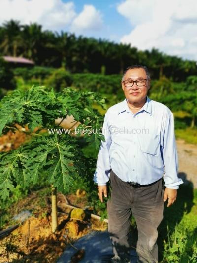 ԭ����ľ���� ��Original papaya tree��