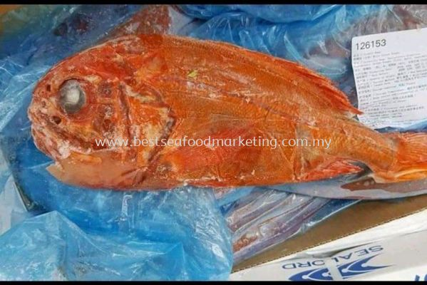 Orange Roughy / ³¤ÊÙÓã (Size 1.25kg-1.5kg)(sold per pcs)