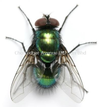 Fly Repellent with Germicide