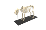 Tiger Bone Project is done on September 2018