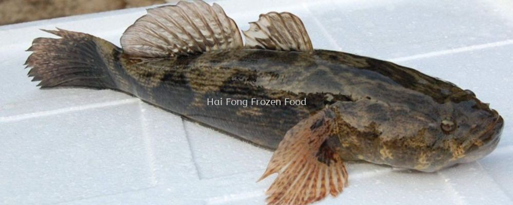 Frz Fish Marble Goby