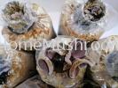 Black Wood Ear / Fungus Black Wood Ear (Black Fungus)