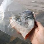 Salmon Trout Head / 鳟鱼头 (sold per pack)