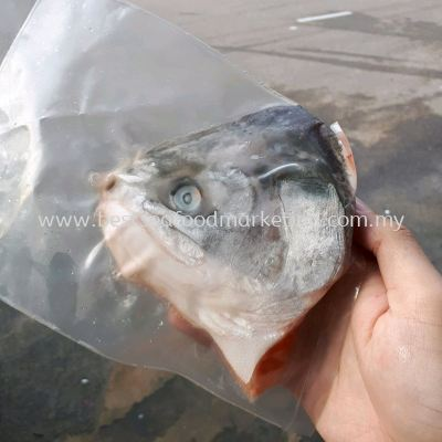 Salmon Trout Head / ÷®ÓãÍ· (sold per pack)