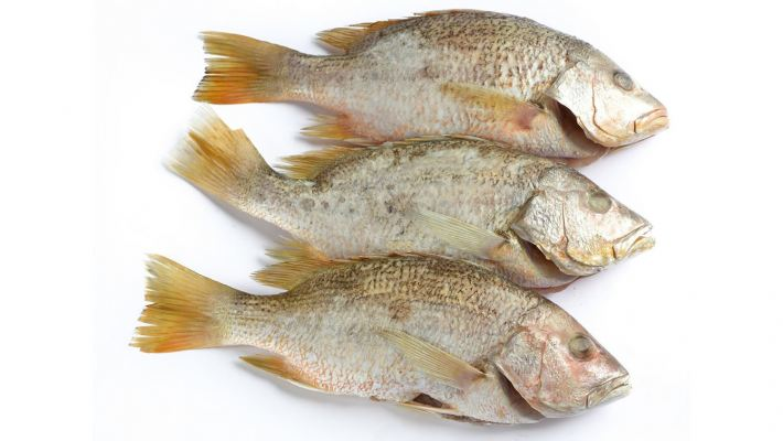 Red Snapper (Cleaned)
