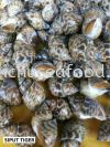 Siput Tiger Frozen Clam
