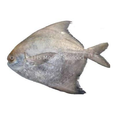 Fish Chinese Pomfret