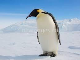 Cute Peguin