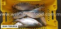 Ikan Terubuk Frozen Fish