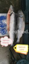 Salmon Atlantic & Salmon Coho Frozen Fish