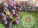 黑加仑子 Blackcurrant Imported Fruits  进口水果