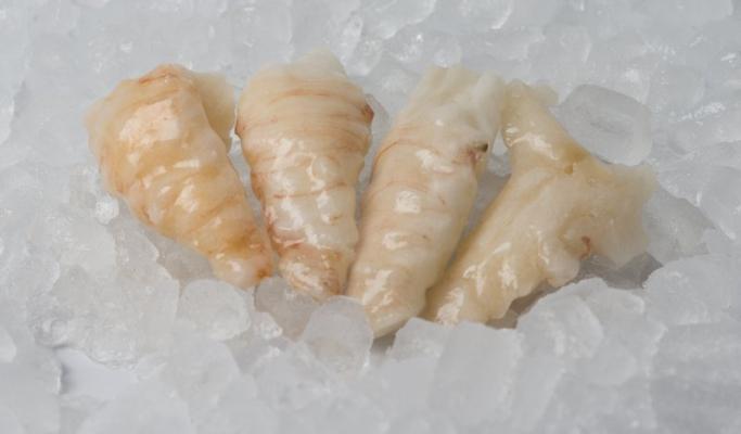 Slipper Lobster Meat