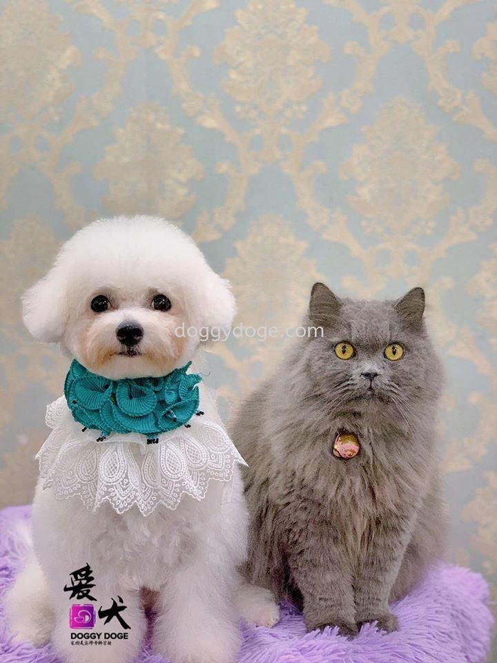 Dog & Cat - Can Be Friend 猫狗相处乐融融