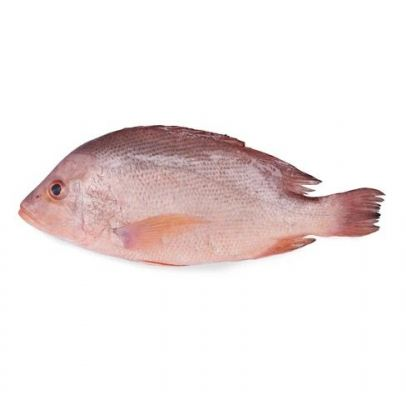 Red Snapper - LIVE