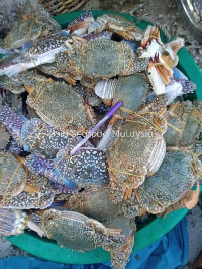 »¨Ð· (Flower Crab)