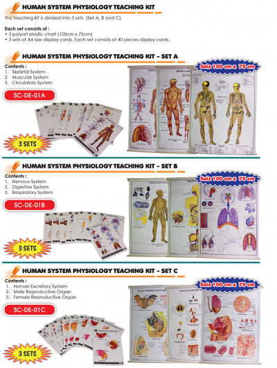 SC-DE-01A Human System Physiology Teaching Kit - Set A