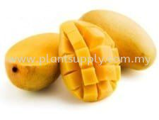 What can Mangoes Do For You?