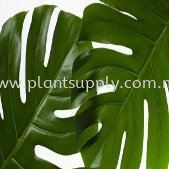 What Plant leaves trying to tell U?