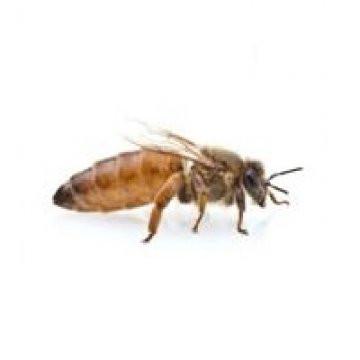 QUEEN BEE蜂后