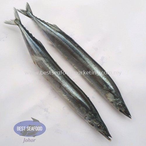 Sanma / 秋刀鱼 (sold per kg)