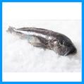 New Zealand Blue Cod Fish (Whole)