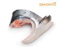 Salmon Collar 三文鱼 & 海鲜 Salmon & Seafood