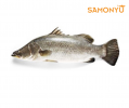 金目鲈 Barramundi (Ikan Siakap) 800g - 1kg 三文鱼 & 海鲜 Salmon & Seafood