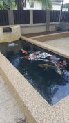 Standard rectangular koi pond @ Seri Austin Koi Pond Design and Build