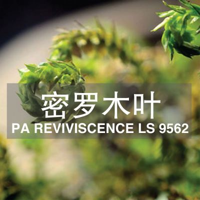 ����ľҶ PA REVIVISCENCE LS 9562