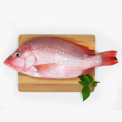 Red Snapper 600+��gram/pcs