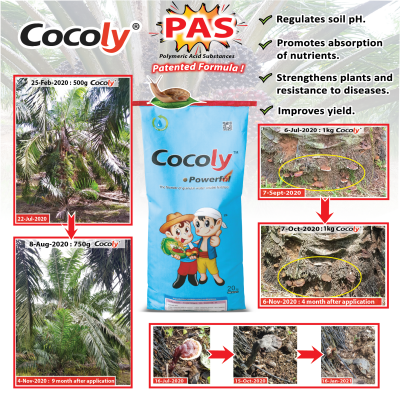 Cocoly trial in Oil Palm Tree
