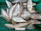 Ikan Gu Nam (牛南) Frozen Fish