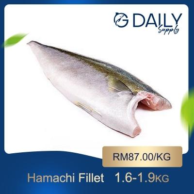 Hamachi Fillet (Japan)