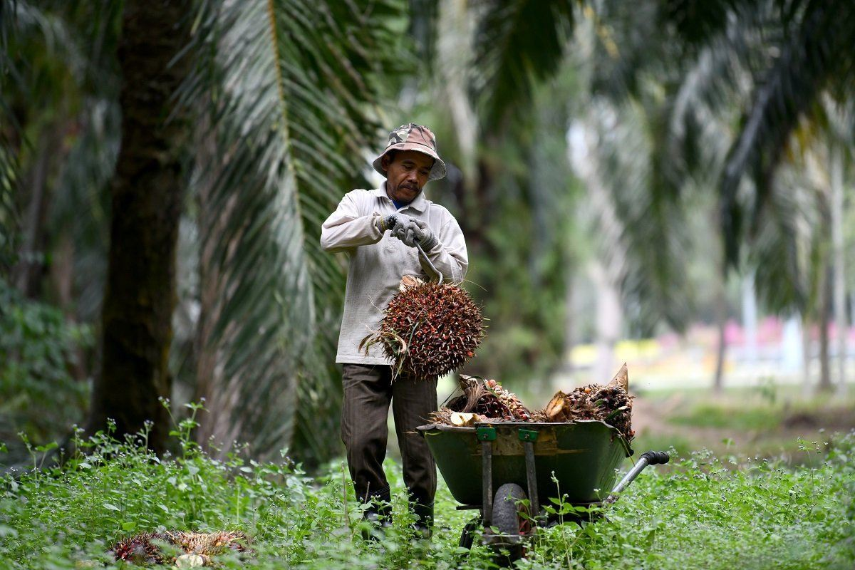 Plantation associations oppose plantation sector inclusion in HRDF Act