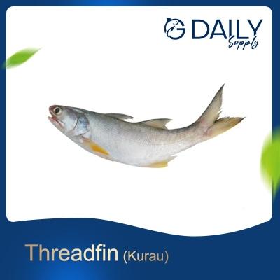 Threadfin (Kurau)