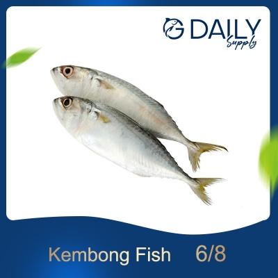Kembong Fish